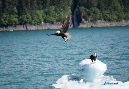 Alaska - Tiếng gọi nơi hoang dã