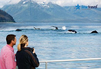 Lên du thuyền 5 sao Ovation of the Seas ngắm cá voi Alaska