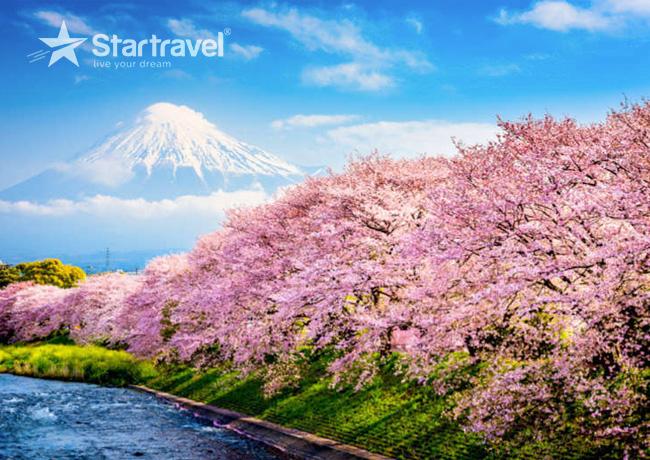 Cùng Du thuyền Spectrum of the Seas chiêm ngưỡng mùa hoa anh đào Nhật Bản