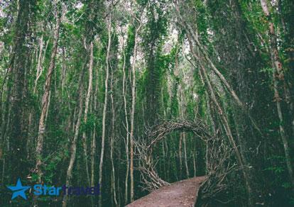 Tour du lịch Long An Lễ 2/9 khám phá con đường xuyên rừng tràm đẹp nhất Việt Nam từ Sài Gòn