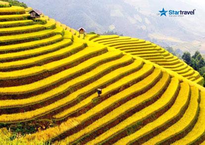 Tour du lịch Mai Châu - Mộc Châu - Yên Bái - Sapa mùa lúa chín 6 ngày bay Vietnam Airlines từ Sài Gòn