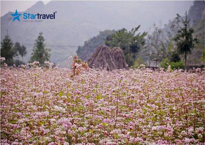Tour du lịch Đông Bắc - Hà Nội - Hà Giang - Hoa Tam Giác Mạch 5 ngày mùa Thu từ Sài Gòn