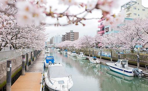 Kumamoto, Nhật Bản