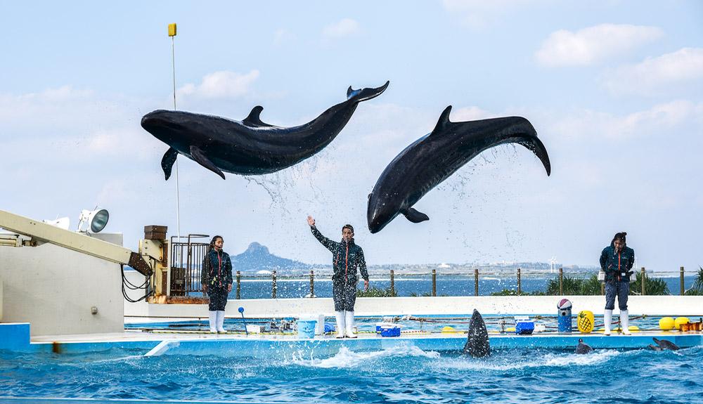 du thuyền 5 sao xiếc cá heo okinawa