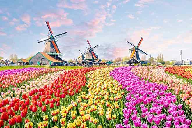 Cánh đồng hoa tulip